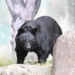 熊よけ・熊撃退グッズ 山歩きには身を守る準備を!用意したいグッズ紹介