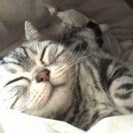 睡眠時の歯ぎしりの原因は?自分でできる対策と防止策で快適な眠りを